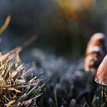高清镜头下的野生蘑菇超清