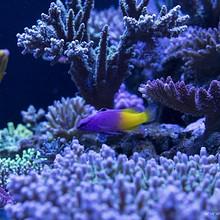 水族馆珊瑚群中的热带鱼高清电脑桌面壁纸图片