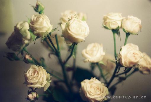 超好看的唯美花朵壁纸图片