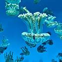好看唯美的水母群