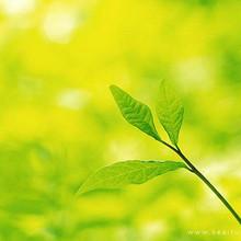 的绿色让生活更加的快乐和
