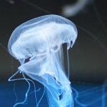 海洋中发光的好看水母高