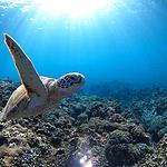 好看海中畅游的海龟图片