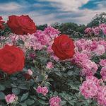 爱丽丝梦游仙境复古花朵