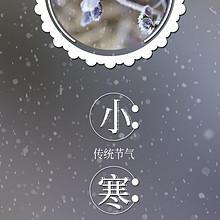 小寒时节植物飘雪结霜高清图
