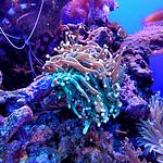 珊瑚图片-唯美海底五颜六