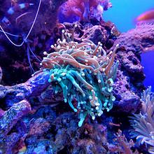 珊瑚图片-唯美海底五颜六色神奇的珊瑚图片大全
