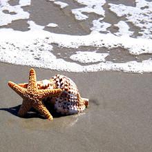 海星图片-漂亮的有神奇再生能力的海星图片大全
