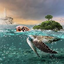 海龟图片-漂亮的海中奋力游泳的海龟图片大全