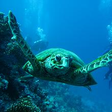 海龟图片-好看海中畅游的海龟图片大全