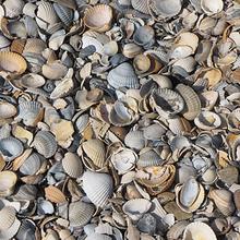 贝壳图片-好看形状各异的贝壳图片大全