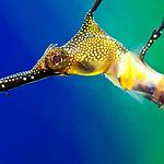 海洋生物图片-唯美海底世