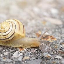 蜗牛图片-漂亮坚强励志缓慢