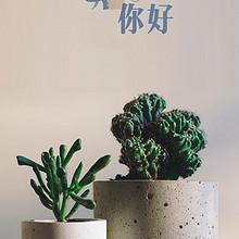 小清新绿色植物盆栽最新秋