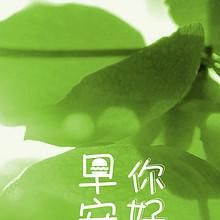 唯美护眼绿色叶子精选早安