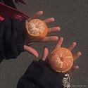 一人一个橘子超甜