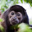 黑色猴子-眼睛水灵