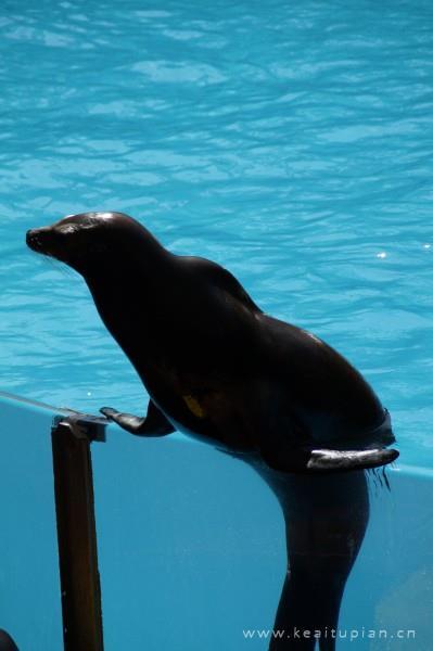 动物园里一只可爱的海狮图片大全