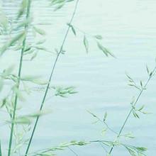 关于梦想的早安清新绿色植