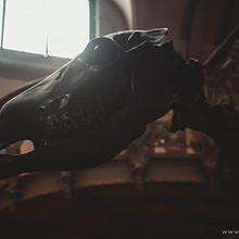博物馆霸气古代生物化石图片大全