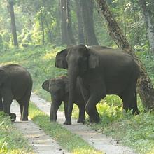 野生大象群群居生活图片壁