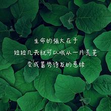 正能量励志语录精选绿叶春色背景图片