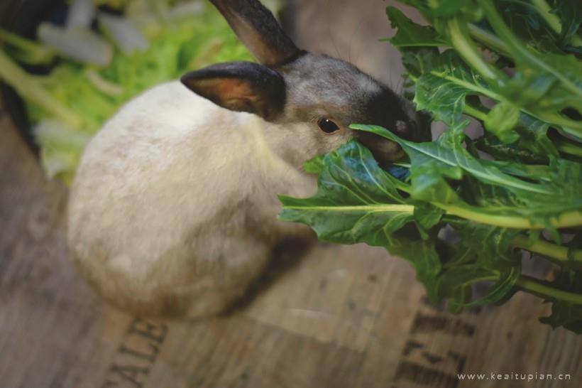 可爱的小兔子高清壁纸图片大全