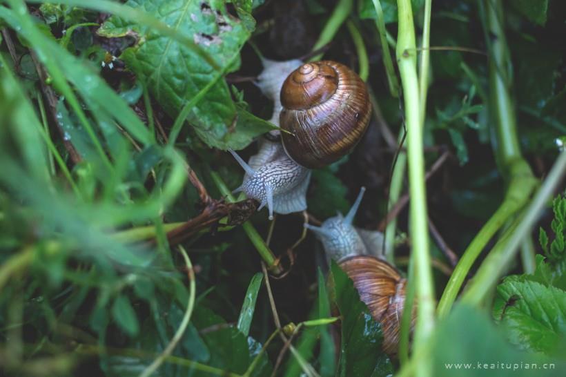 缓缓前行的小蜗牛高清壁纸大全