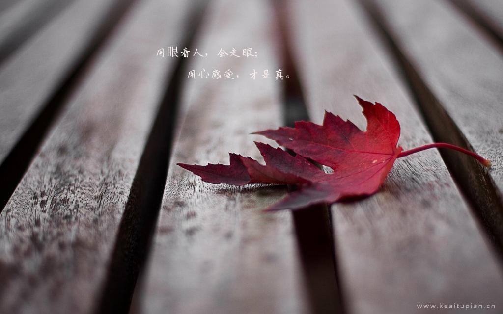 伤感的树叶黄了人心凉了文字风景意境图片