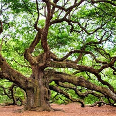 树干野蛮生长的一棵树唯美有意境头像图片