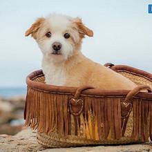 可爱乖巧的狗狗日历简约高清图片