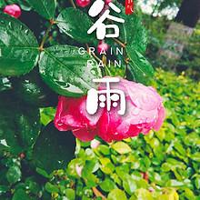 5月节气谷雨精选落满雨滴的粉色花卉图片