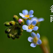 谷雨节气文字精选一半含苞一半盛放的花朵唯美清新图片