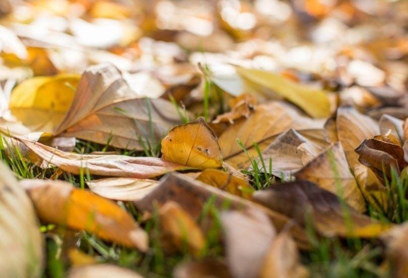 秋天伤感唯美意境-落在树下的枯叶图片