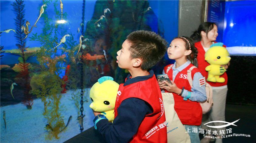 上海海洋水族馆旅游景点真实照片风景