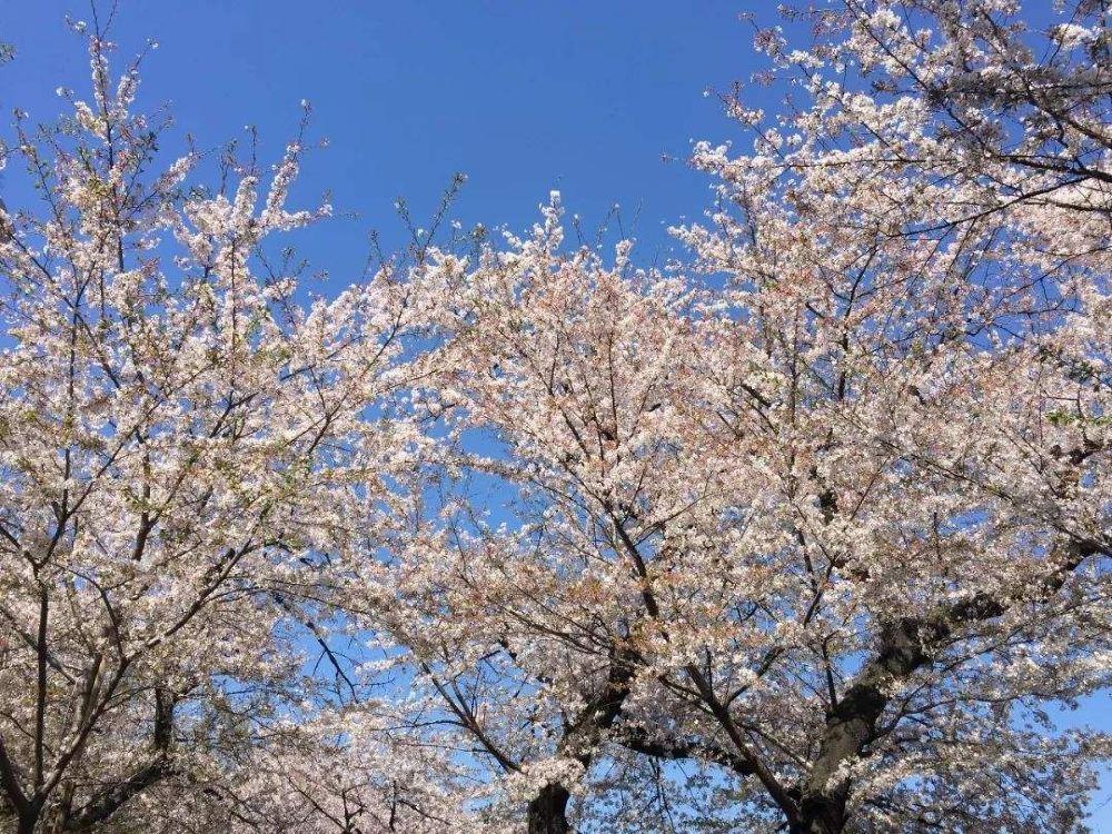 东京皇居唯美风景高清壁纸图片