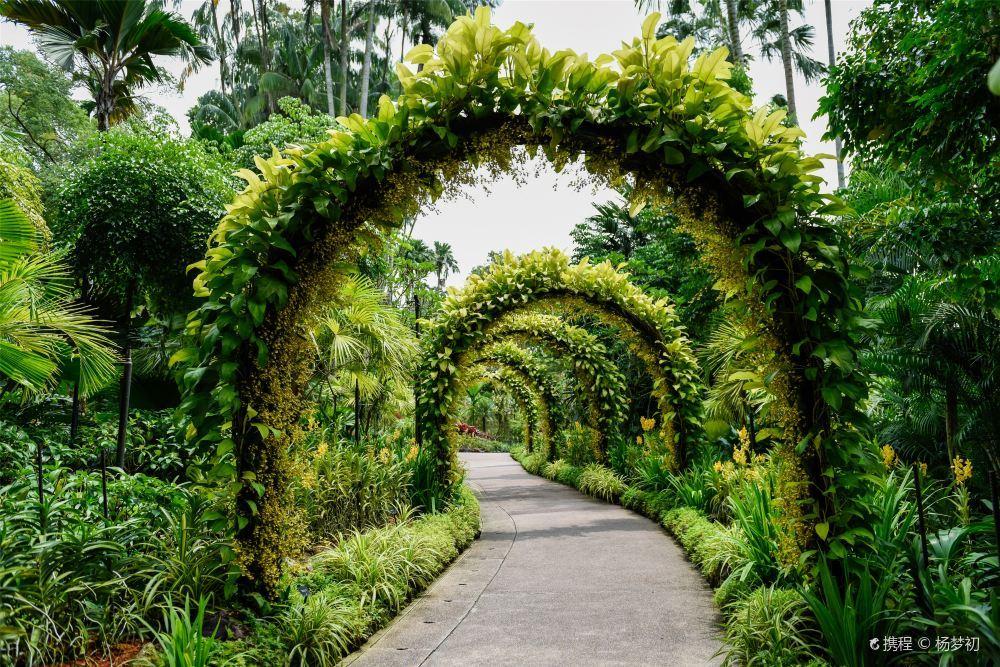 新加坡植物园唯美小清新风景壁纸图片