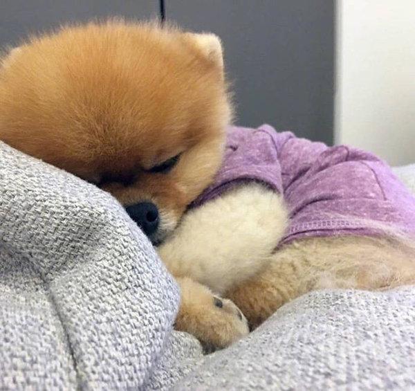 超可爱的小狗子唯美图片大全丨上班的困交给咖啡 下班的累交给酒杯