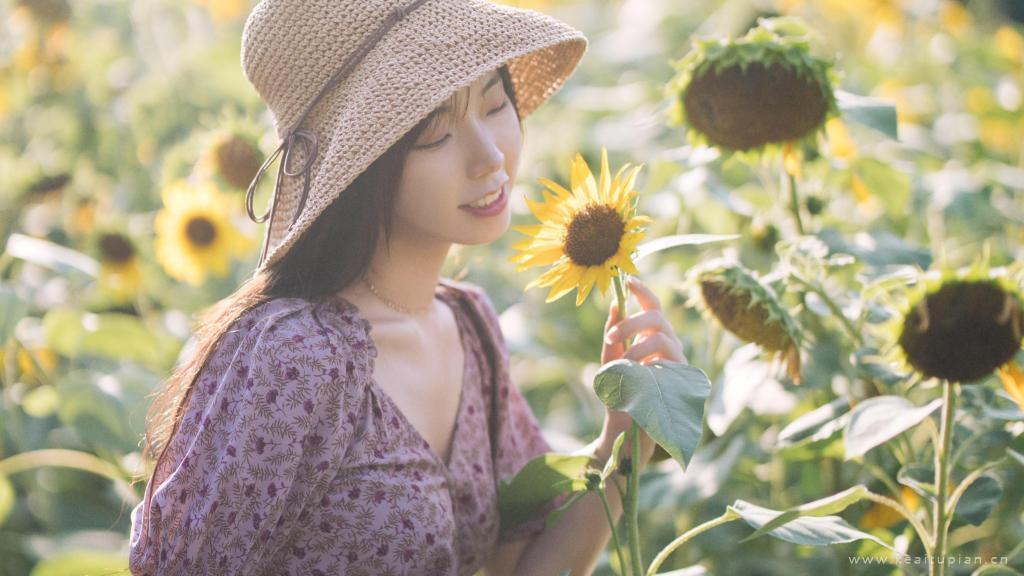 向日葵花海美女写真图片桌面壁纸