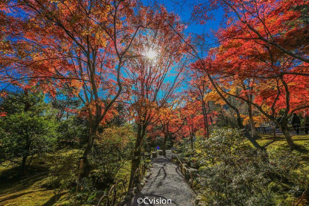 高清京都天龙寺旅游景点风景超美图片