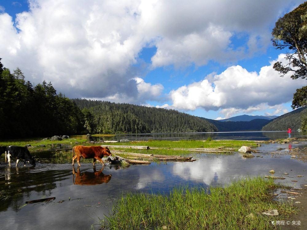香格里拉碧塔海唯美风景高清壁纸图片