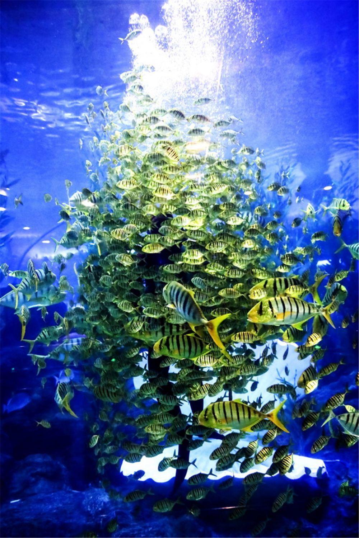 青岛海底世界旅游景点高清真实风景壁纸