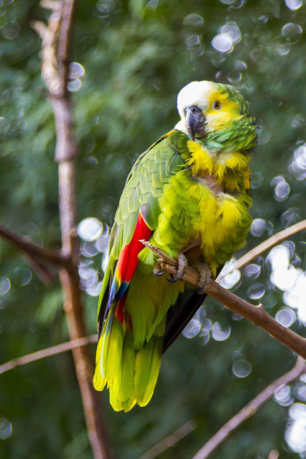 吉隆坡飞禽公园鸟类动物图片大全