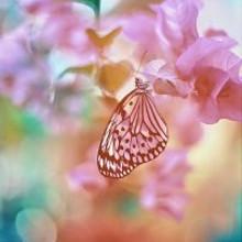 蝴蝶可爱手机大图片B