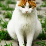 可爱猫咪的绿色小清新世
