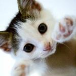 超葫表情的小猫咪图片