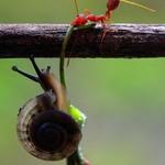 大自然美丽的动物图片