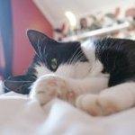 可爱的猫咪卖萌图片
