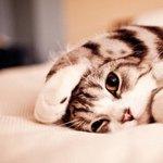 萌翻了可爱小猫咪图片大