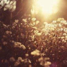 夕阳西下唯美落日图片
